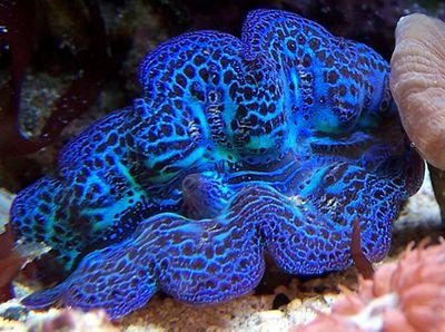 clam. Nano 1 gallon. No longer set up.