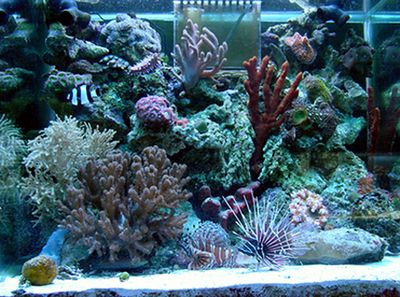 37 gallon reef tank with lion fish. No longer set up.