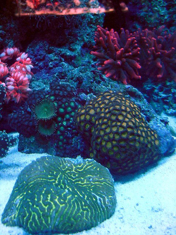 37 gallon reef tank with lion fish. No longer set up.