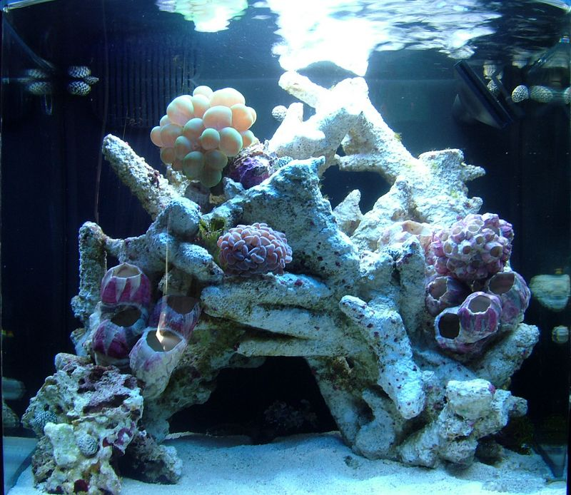 Sept 5, 2005. 6 gallon nano.