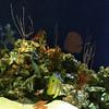 reefwfish