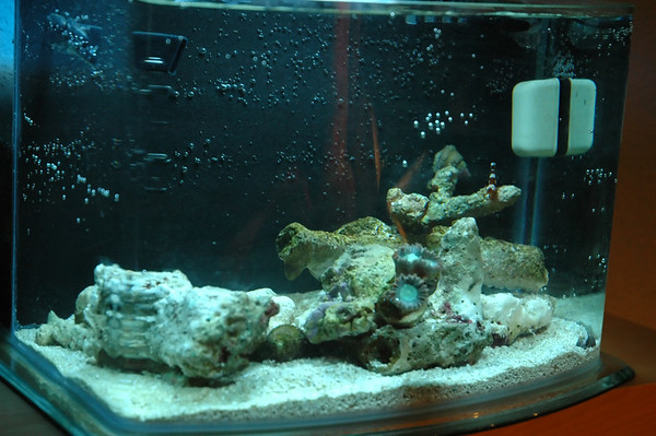 Pico Reef Tank