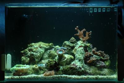 Pico Reef 10/25/2007