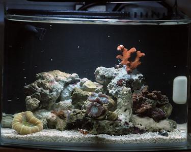 Pico Reef 10/12/2007