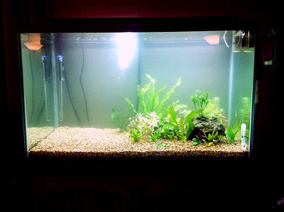 My half-planted tank, waiting for me to have time off work to go mucking in the yard for more rocks.