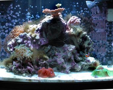 Reef Tank 10/12/2007