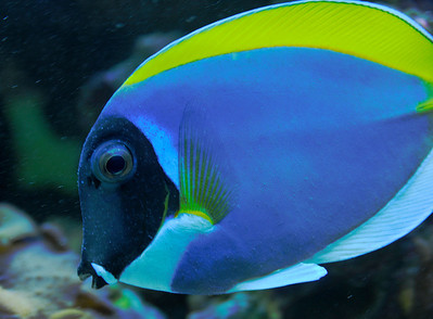 James Mason beautiful powder blue tang