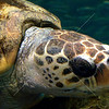 Turtle preservation is practiced by aquariums and research facilities. Turn off the lights at night.
