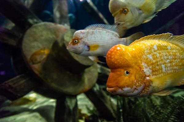 SEA LIFE Minnesota Aquarium in the Mall of America