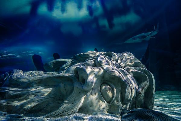 SEA LIFE Minnesota Aquarium in the Mall of America, Poseidon, Shark in Aquarium