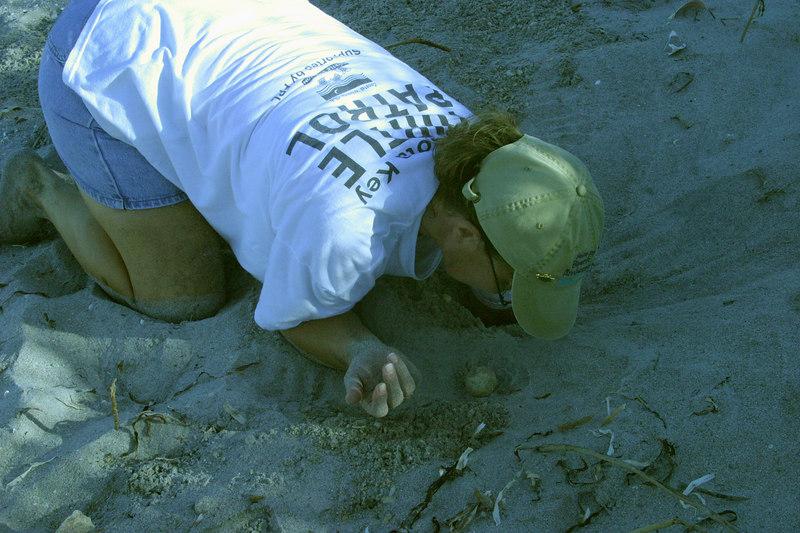 Casperson Beach Turtle Patrol
