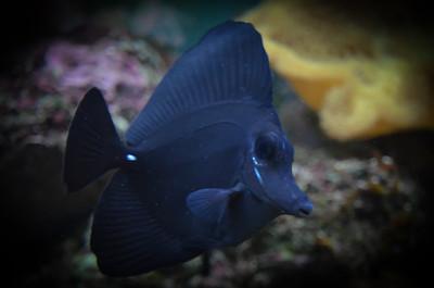 Underwater Ninja