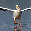 Pelican Landing Part 1