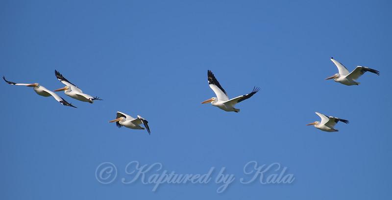 Not A Flock Of Seagulls