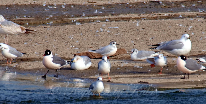 Little Gull View 8
