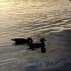 Silhouette of Wood Ducks at Dusk