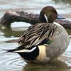 Puffer Duck View 2