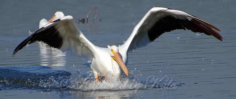 Pelican Landing Part 2