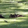Mom & The Kids Enjoying Some Duckweed