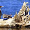 Artistic Driftwood