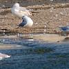 Little Gull View 5