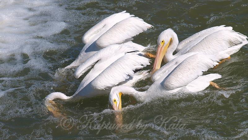 Synchronized Fishing 2