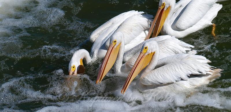 Synchronized Fishing 8