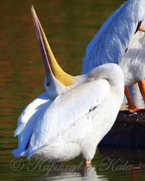 Laid Back Bird