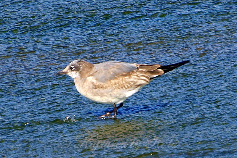Rare Bird Sighting View 1