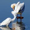 Walking Past The Pelican