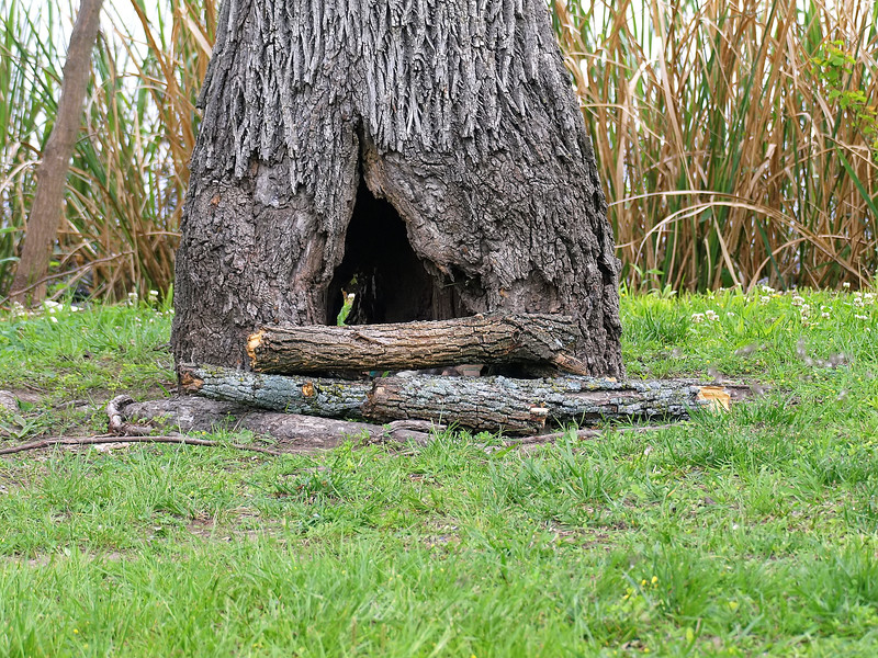Interesting Tree Cavity