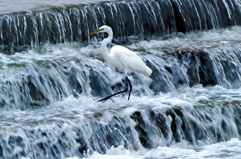 Waterfalls With Egret