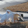 Wild Goose Chase 9