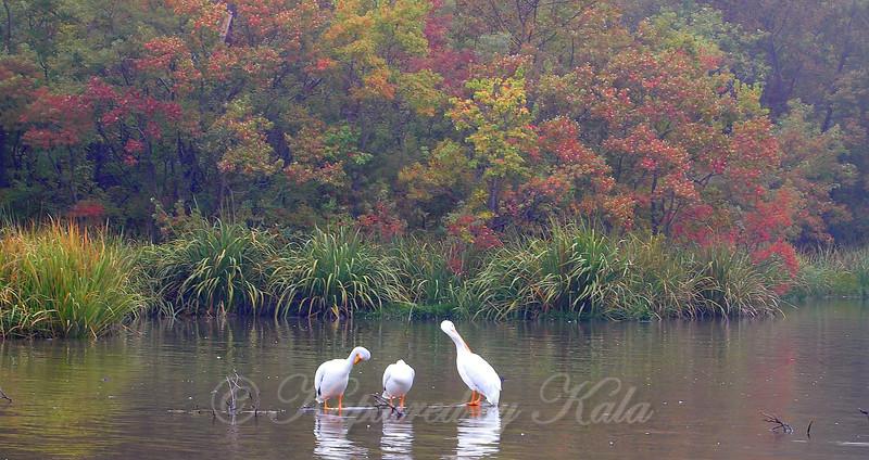 White Rock Lake in Autumn
