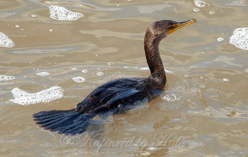 Looking Down On A Cormorant View 2 of 4