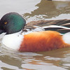 Just Another Pretty Shoveler