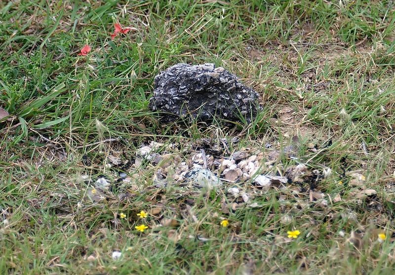 New Killdeer Nest