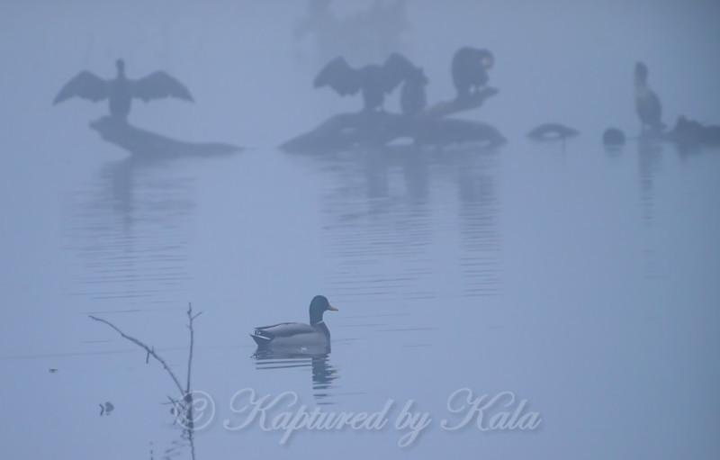 Onward Thru  The Fog