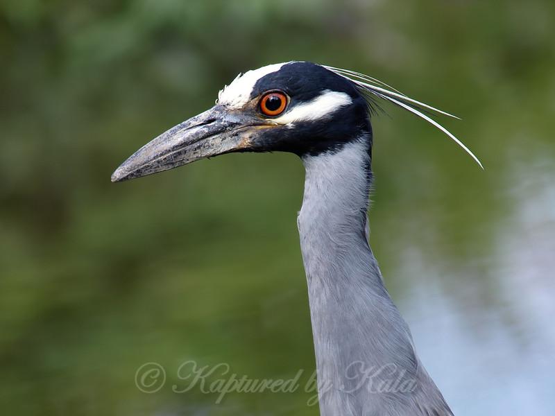 Pop-Up Heron