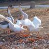 Wild Goose Chase 1