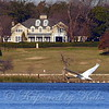 Lakeside Mansion With Flying Swan