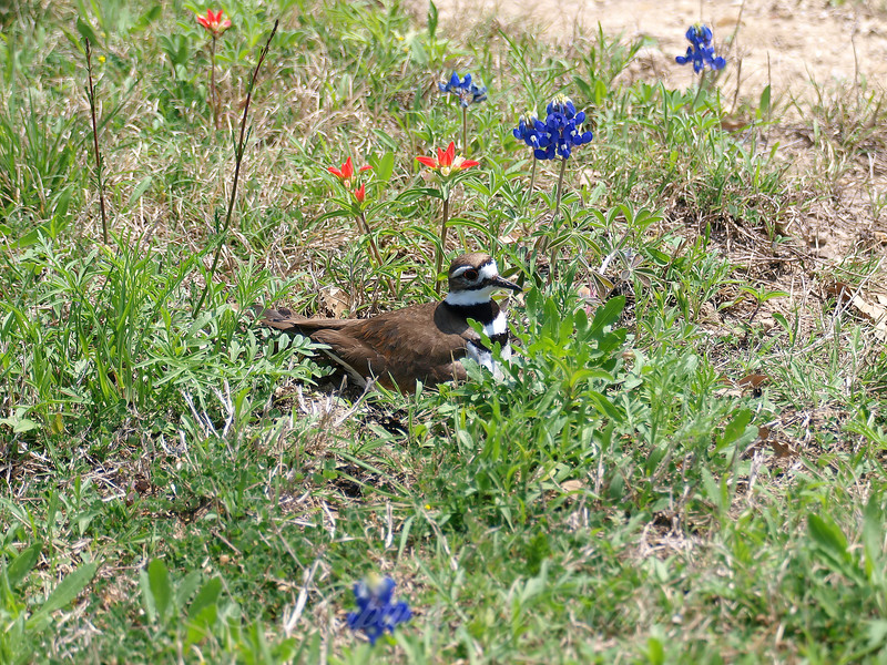 Nesting in the Wildflowers