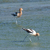 Mr. & Mrs. Avocet View 2