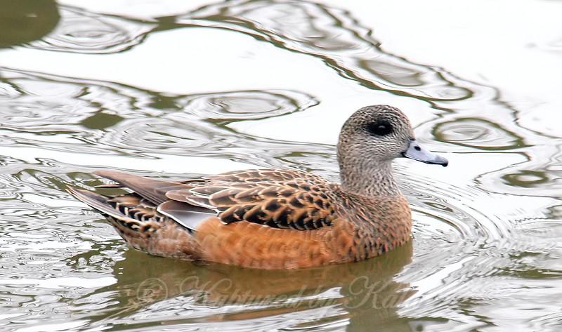 Goth Duck