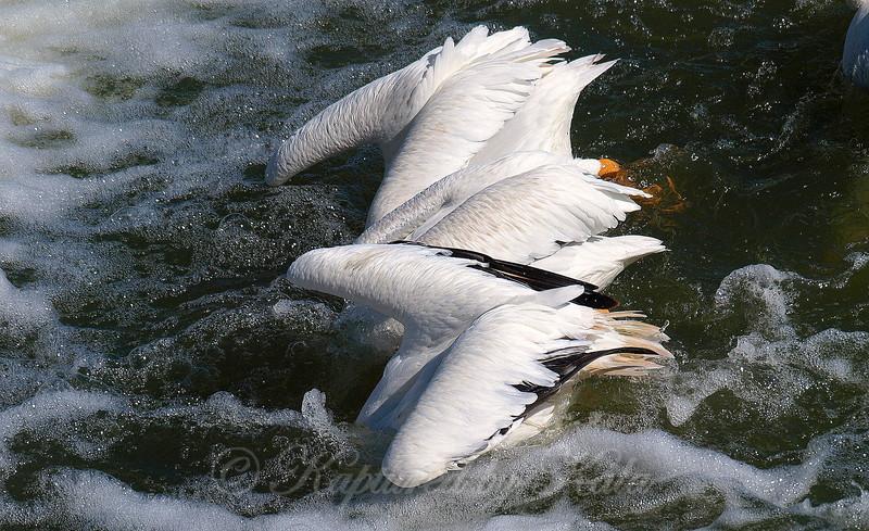 Synchronized Fishing 6