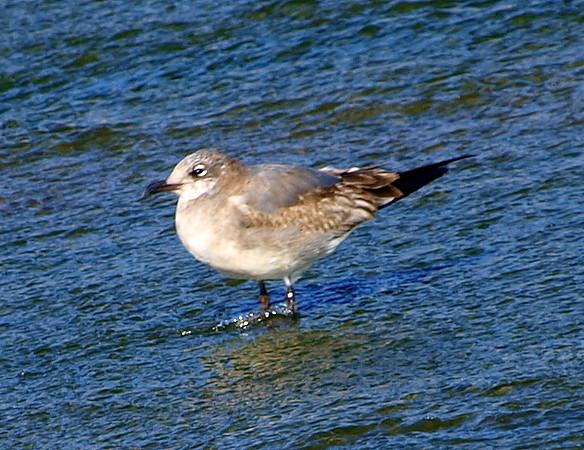 Rare Bird Sighting View 3