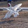 Wild Goose Chase 3