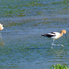 Mr. & Mrs. Avocet View 1