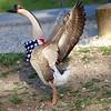 Patriotic Goose