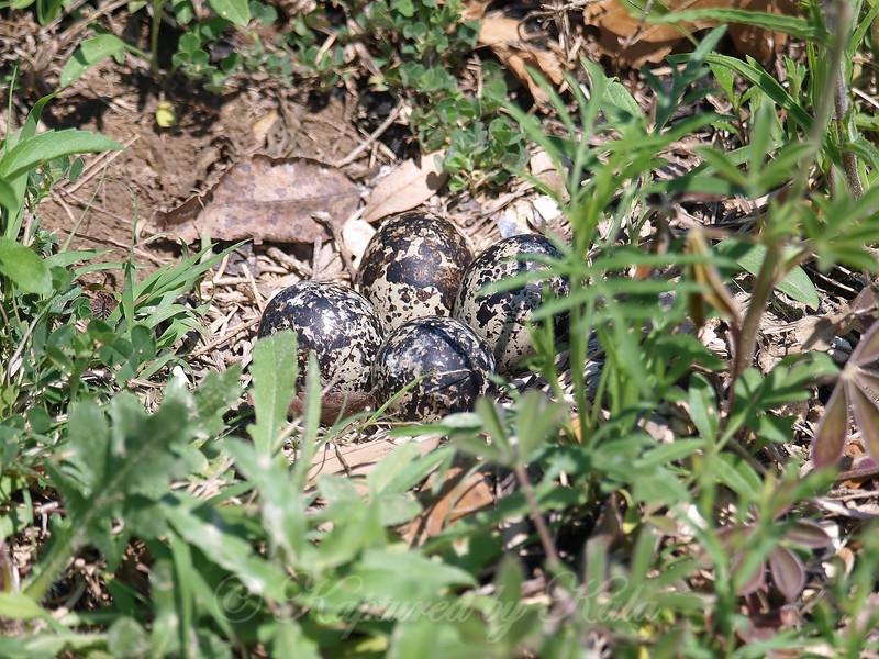Four Beautiful Eggs